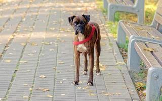 brauner Hund auf dem Bürgersteig