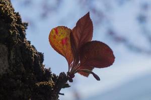 Silhouette eines Herbstblattes foto