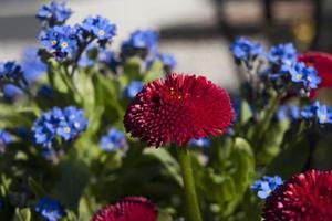 rote und lila Blüten