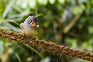 Vogel sitzt auf Schnur