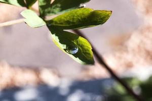 Tautropfen auf grünem Blatt foto