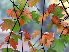 bunte Herbstblätter foto
