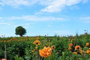 Feld mit Blumen