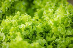 Bio-Salatblätter
