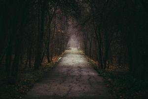 Straße in einem dunklen Wald foto