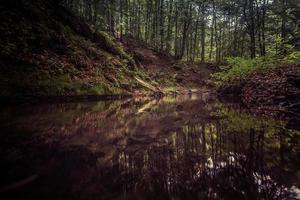 Fluss in einem dunklen Wald foto