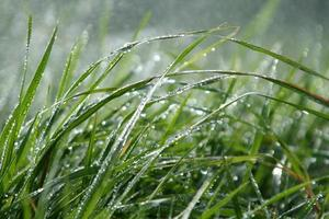 grünes Gras im Regen