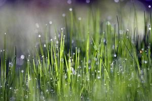 Regen fällt auf grünes Gras