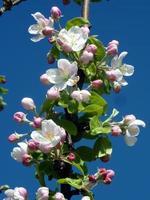 Nahaufnahme von weißen Blüten foto