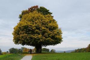 großer Baum in einem Park foto