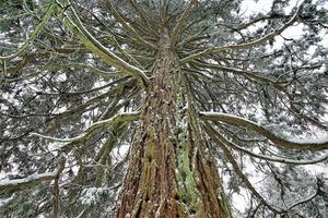 Baum im Winter foto