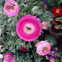 Strauß rosa Blumen foto