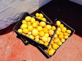 Kisten mit Zitronen