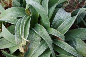 gefrorene grüne Pläne foto