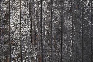 Textur aus gebranntem Holz