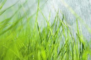Nahaufnahme von frischem Gras foto