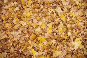 helle Herbstblätter foto