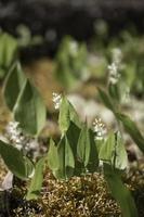 wild blühende Flora