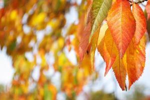 Nahaufnahme von Herbstlaub