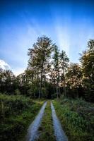 Straße in einem Feld mit Bäumen foto