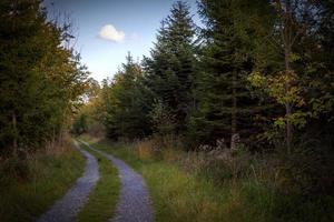 Weg durch einen Wald foto