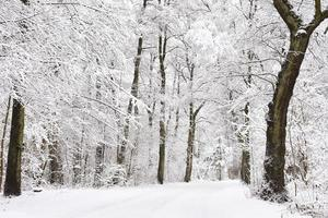 winterliche Forststraße foto