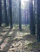 sonnige Waldbäume foto