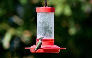Kolibri auf einem Vogelhäuschen