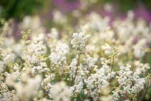 Nahaufnahme von weißen Blumen