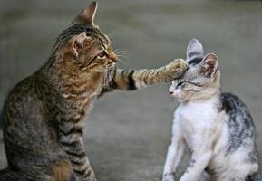 zwei Katzen spielen im Freien