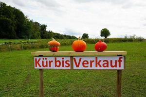 Kürbisverkauf in Deutschland foto