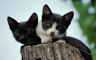 zwei Kätzchen sitzen auf einem geschnittenen Baumstamm