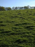 grasbewachsener Hügel und Bäume während des Tages