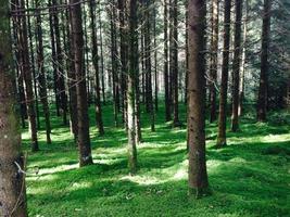 Wald im Sommer foto