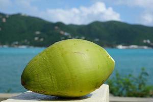 Kokosnuss auf den britischen Jungferninseln