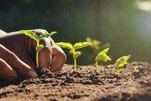 Bauer pflanzt Bohnen im Garten foto