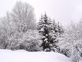 Bäume auf einem schneebedeckten Hügel foto