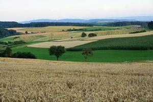Weizenfeld in Hegau, Deutschland