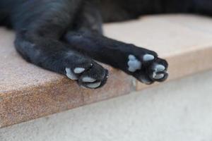 Pfoten einer schwarzen Katze