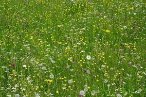 Feld mit Sommerblumen