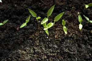 kleine grün sprießende Pflanzen