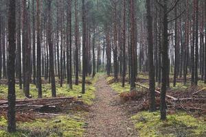 holziger Herbstwald foto