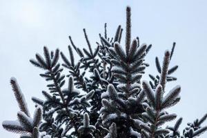 Schnee auf Vandalia