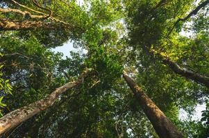 tropischer Waldhintergrund, natürliche Szene mit Baldachinbaum in der Wildnis