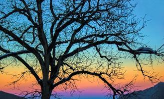 Sonnenuntergang und der einsame Baum