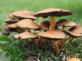 braune Pilze auf grünem Gras foto