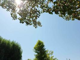 klarer Himmel zwischen Bäumen foto