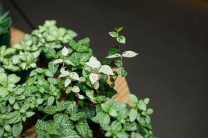 grüne Pflanzen auf schwarzem Hintergrund foto