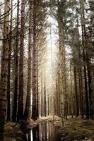 Licht kommt durch Bäume in Schweden foto