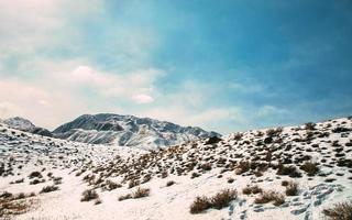 Pflanzen auf schneebedeckten Bergen